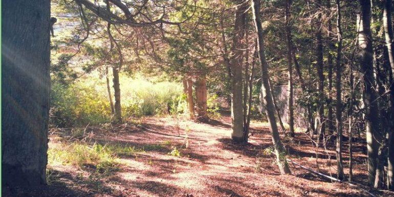 bosque interno
